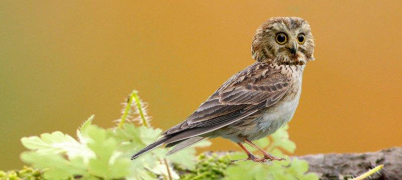 Жаворонок, сова или… Сибирские ученые выявили два новых хронотипа
